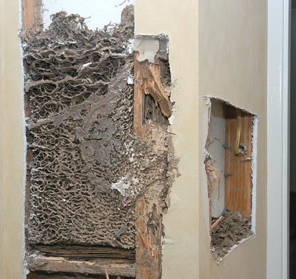 Southern Highlands Pest Control Termites Warning